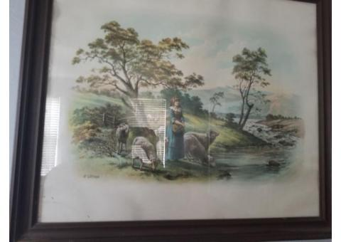 Framed Print.   with sheep..p Watson